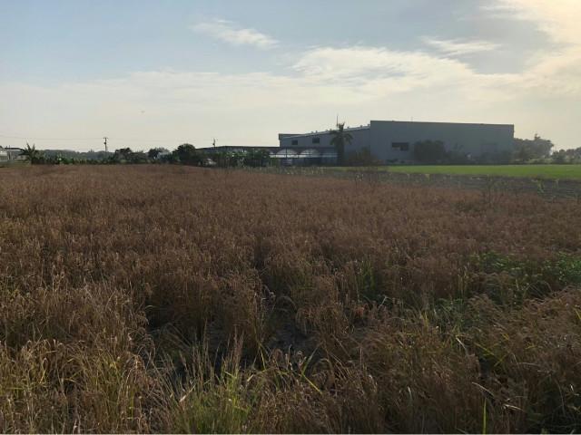 柳營德元埤優質2.5分農地,台南市柳營區路東