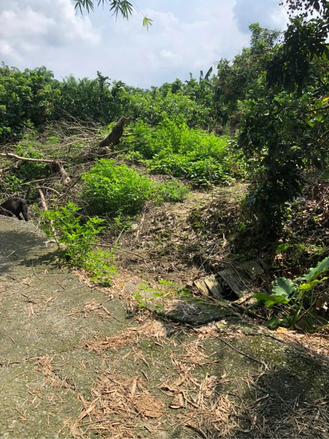 東山區凹子腳稀有建地送農地,台南市東山區大客北一段