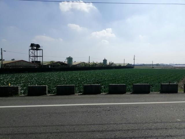後壁南80鄉道旁農地,台南市後壁區南80鄉道